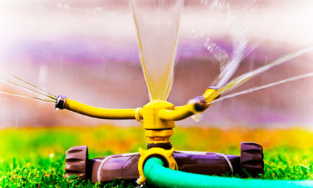 How to Keep Your Landscaping Hydrated During Hot Summer Days