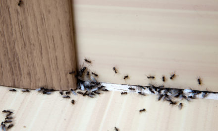 Should You Get Rid of Ants in the Garden?