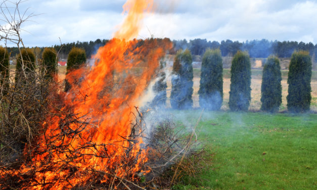 6 Ways to Limit Fire Risk with Landscaping
