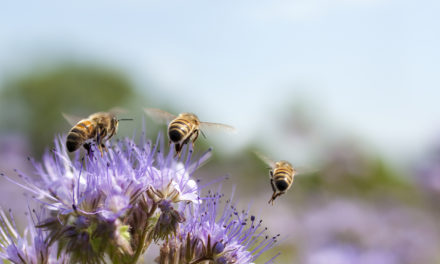 Why You Should Embrace Bees in the Garden