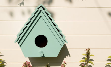 5 Tips for Creating a Safe Birdhouse