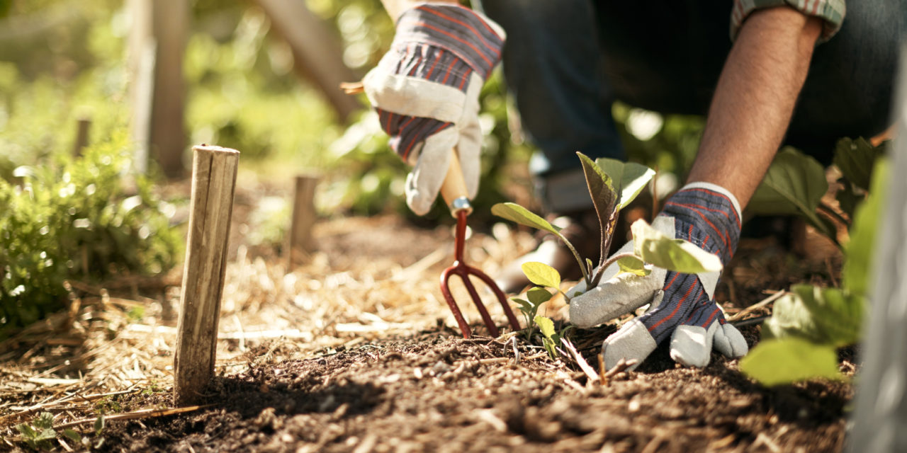 19 Small Ways to Save Money While Gardening