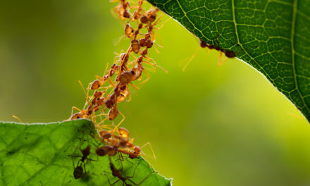 Getting Rid of Ants the Non-Toxic Way