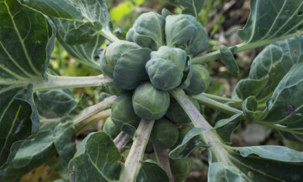 5 Healthy Veggies for Your Garden