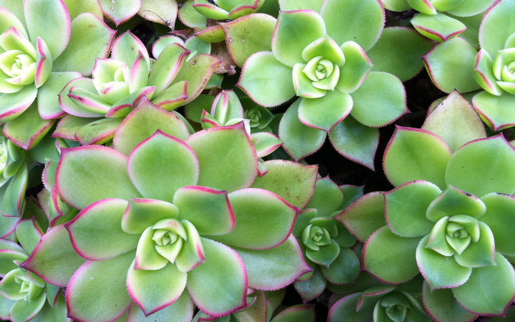 5 Easy Tips for Growing Succulents Indoors
