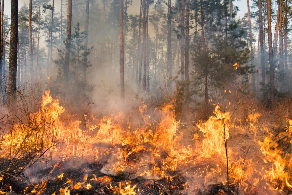 Wild fire Photo Credit: Gilitukha (iStock).
