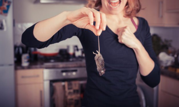 5 Ways to Keep Mice Out of Your Kitchen
