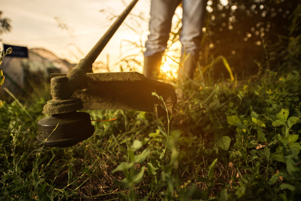 cutting grass Photo Credit: BraunS (iStock).