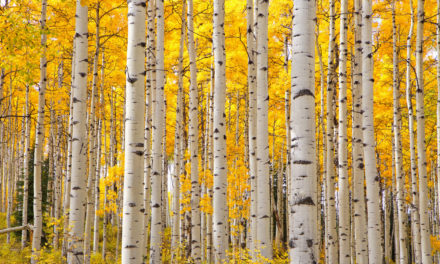 5 Signs of Seasonal Change in Colorado