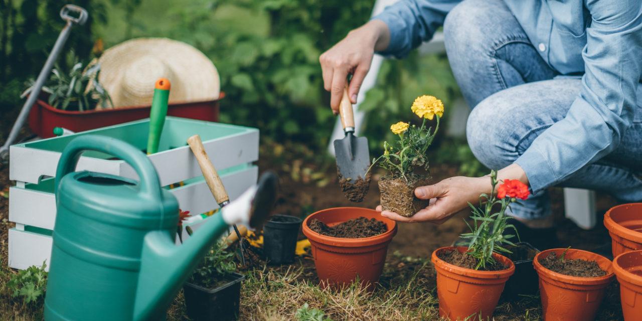 7 Dangers Lurking in Your Garden