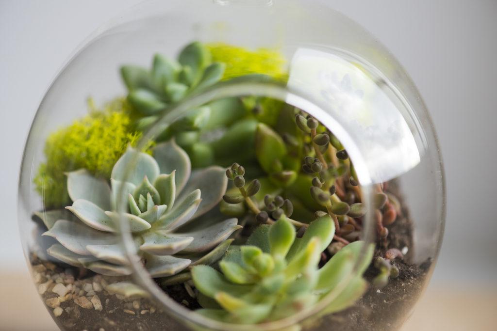 Succulents Indoor Plant Photo Credit: AlxeyPnferov (iStock).
