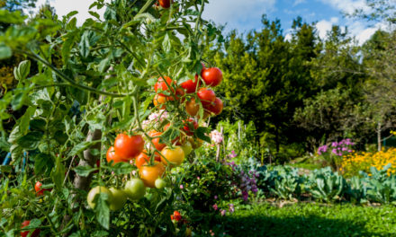 7 Easiest Edible Plants to Grow in Your Home Garden