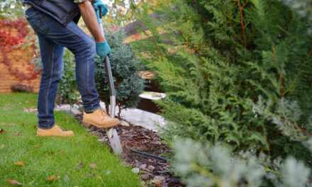 6 Ways to Make Your Garden More Affordable