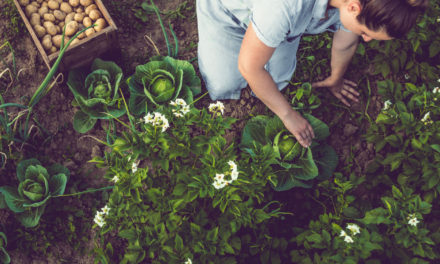 5 Easy Ways to Improve Soil Naturally