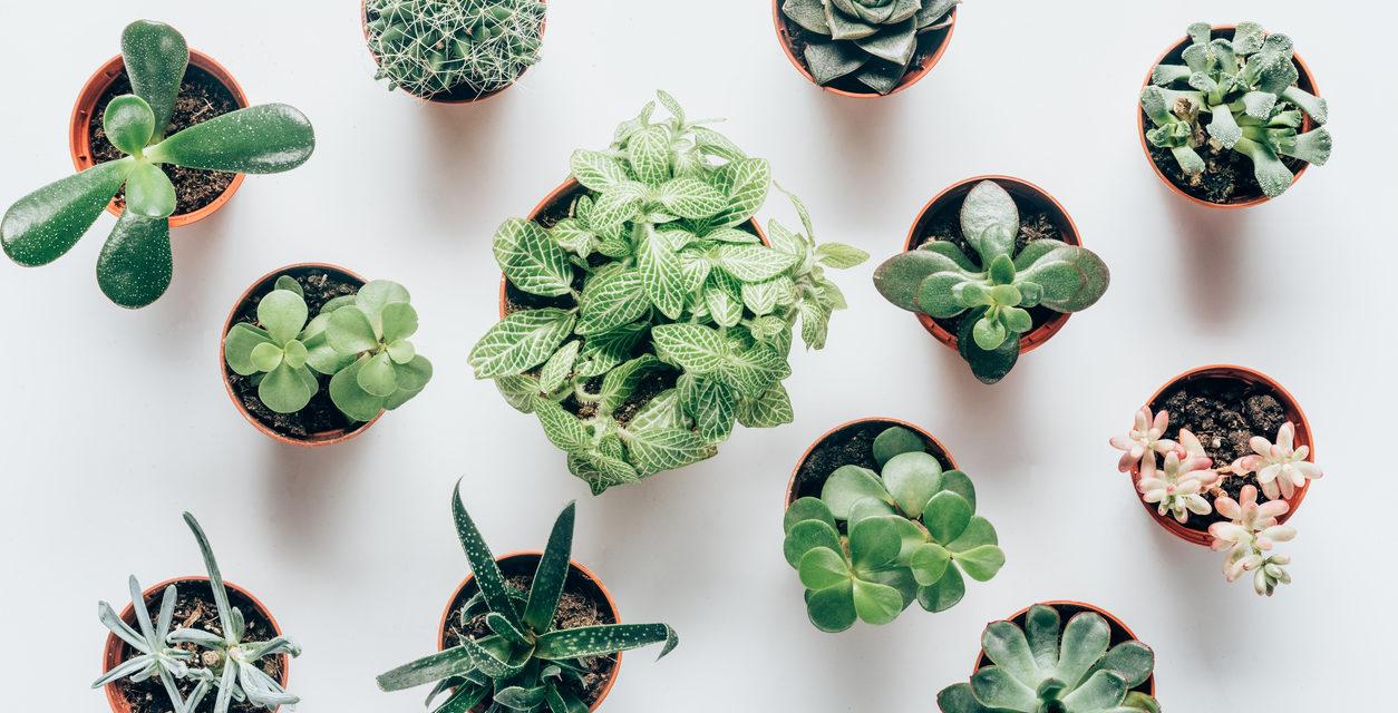 5 Super-Easy Plants For Winter Gardening