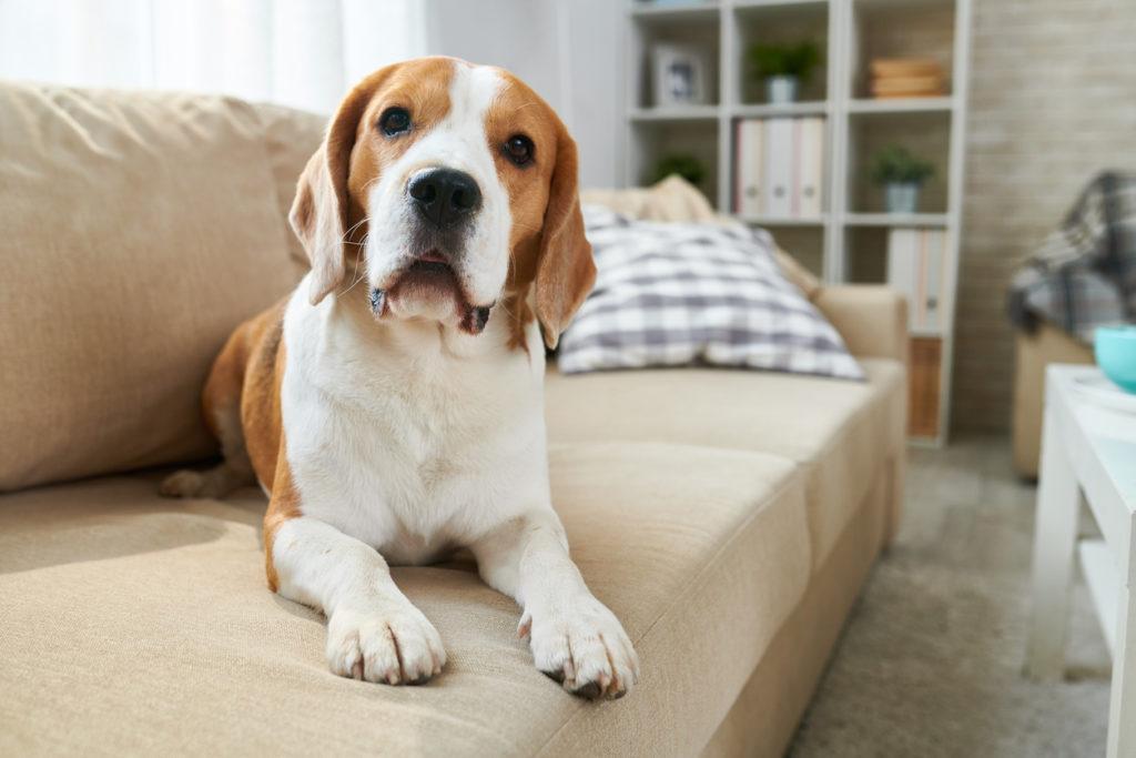Dog Photo Credit: SeventyFour (iStock).