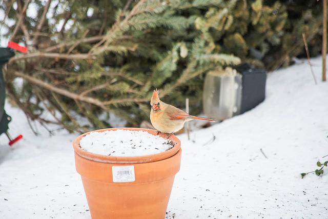 Winter Birds Photo Credit: Ryan and Sarah Deeds (Flickr).