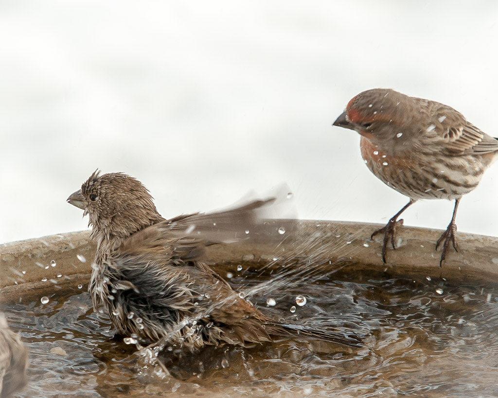 Winter Birds Photo Credit: Sjensen~ Flickr).