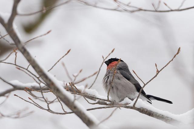 Winter Birds Photo Credit: ozma (Flickr).