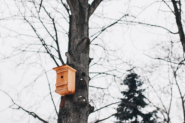 Birdhouse Photo Credit: Marco Verch (Flickr).