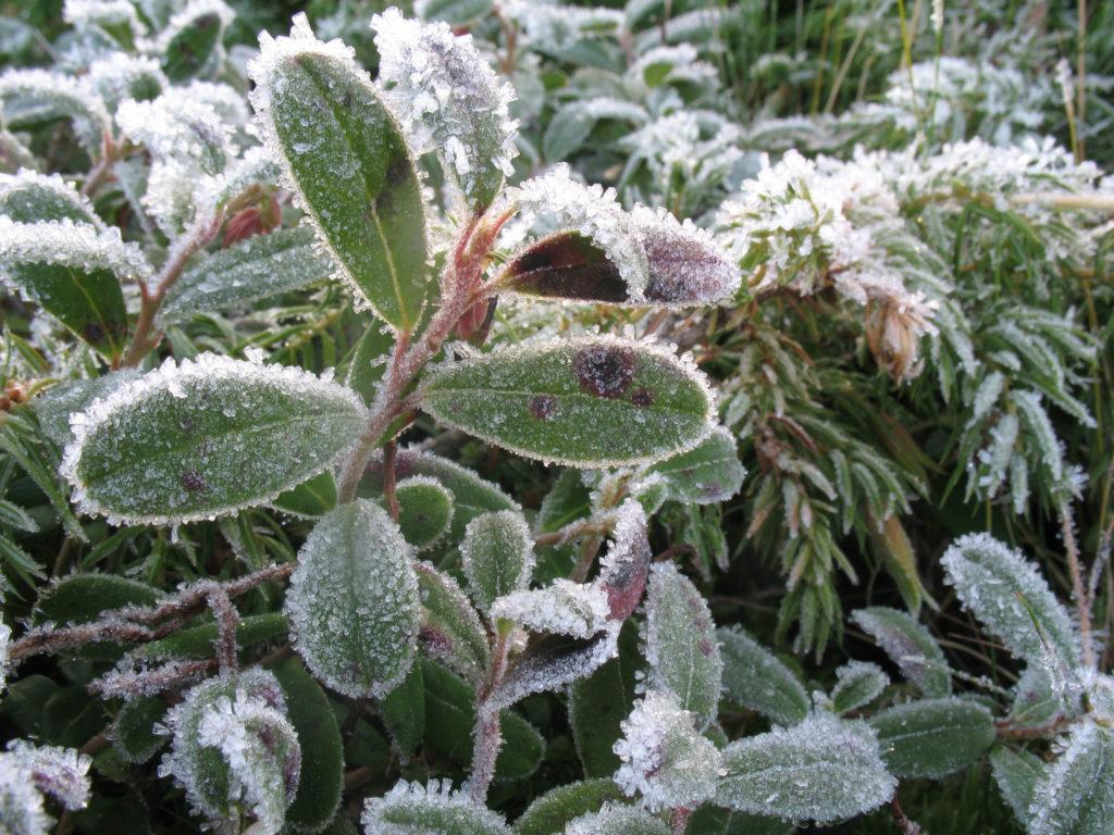 Winter Garden Photo Credit: Gennady Alexandrov (Flickr).