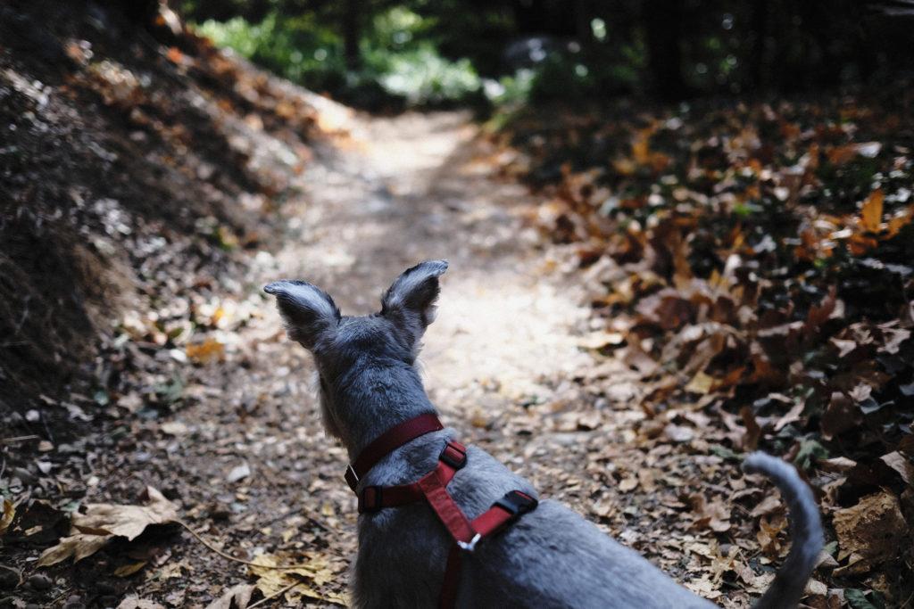 Dog on trail Photo Credit: Brian Gonzalez (Flickr).