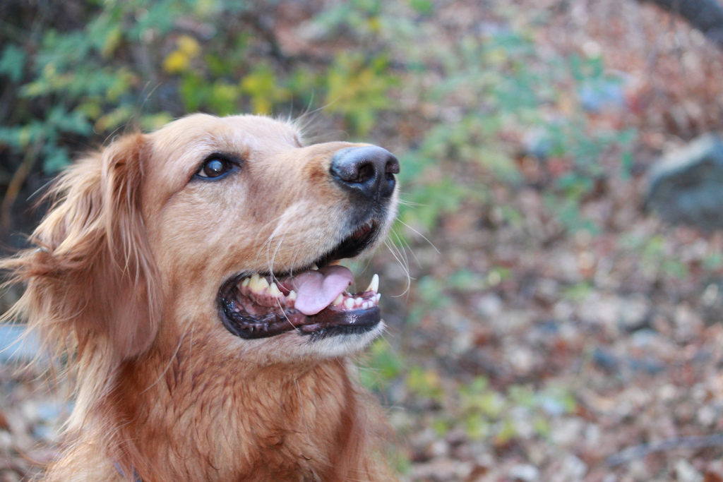 Dog Photo Credit: Mega Hammond (Flickr).