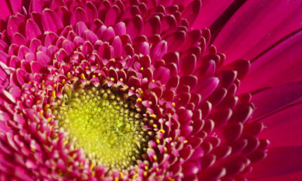 5 Household Plants That Give Back
