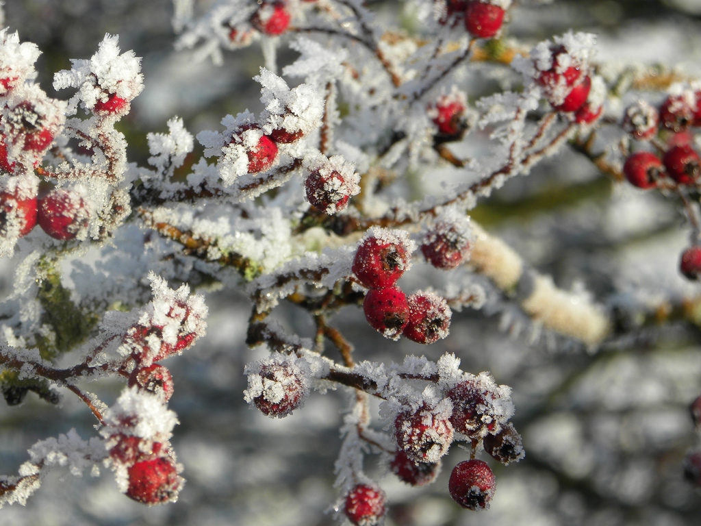Winter Garden Photo Credit: anokarina (Flickr).