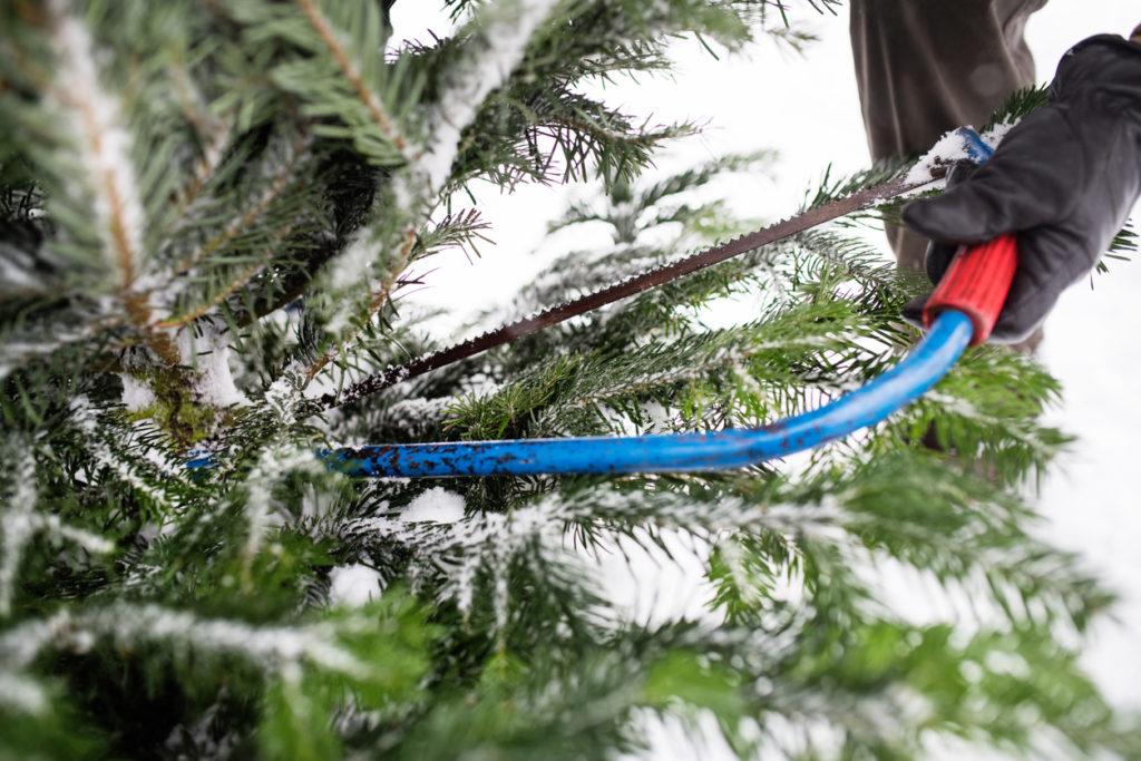 Christmas Tree Photo Credit: Halfpoint (iStock).