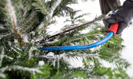 A Horrifying List of Bugs Hiding in Your Christmas Tree