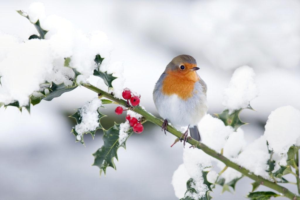 Winter Birds Photo redit: Andrew_Howe (iStock).