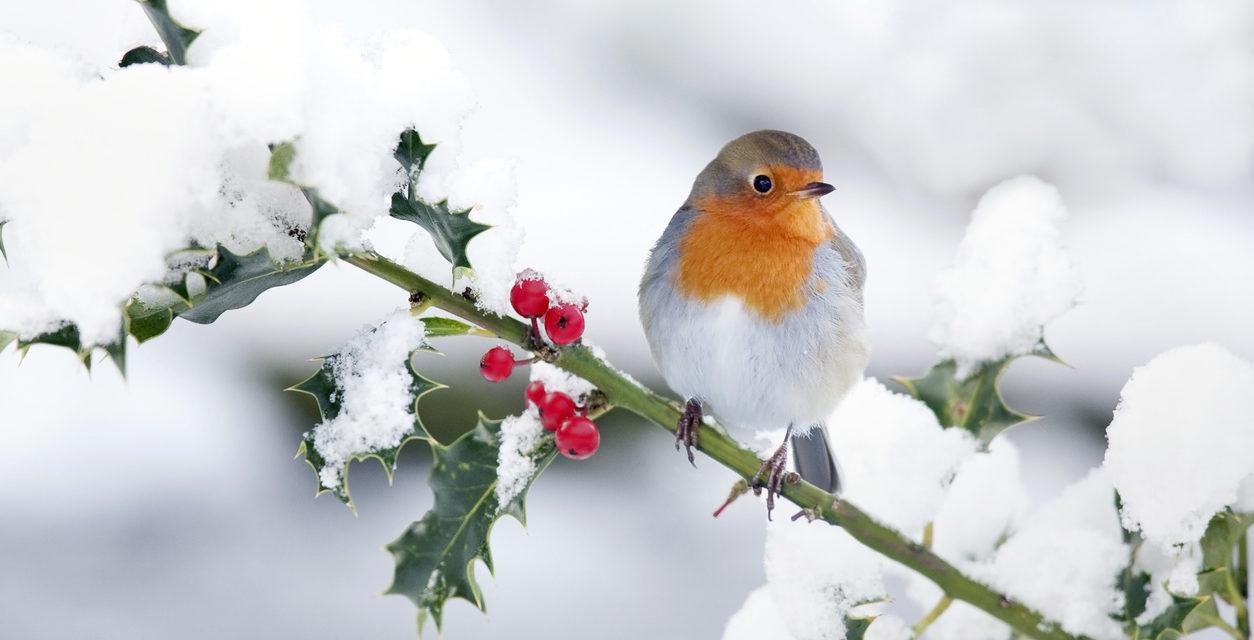 4 Ways to Attract Winter Birds