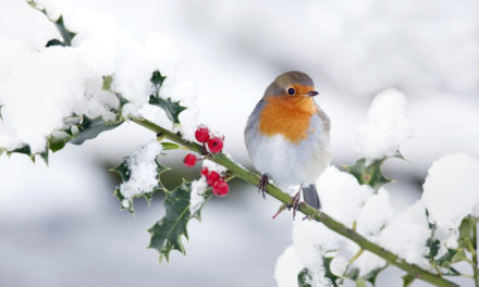 4 Ways to Attract Winter Birds