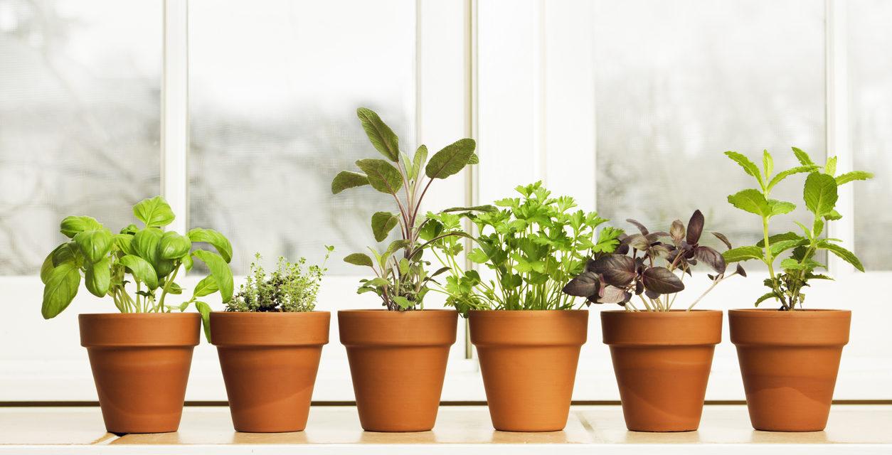 10 Easy Herbs to Grow Indoors