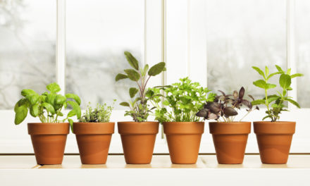 10 Easy Herbs to Grow Indoors
