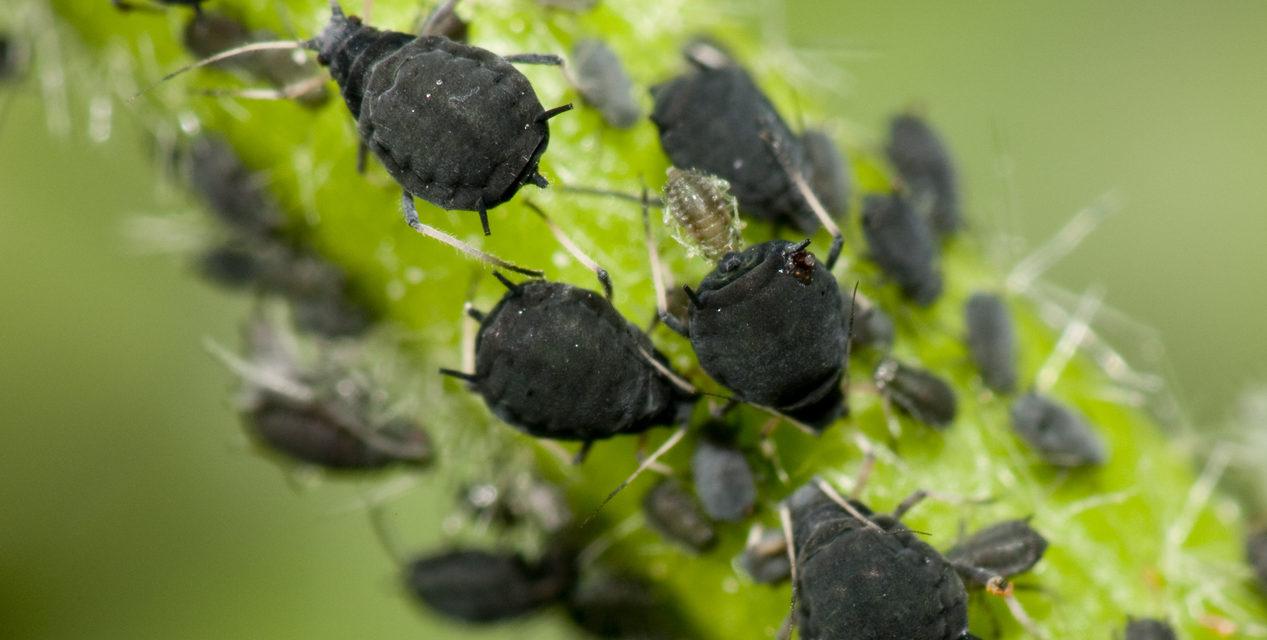 5 Bugs Hiding in Your Houseplants
