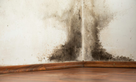 10 Hidden Spots to Check for Mold in Your Home