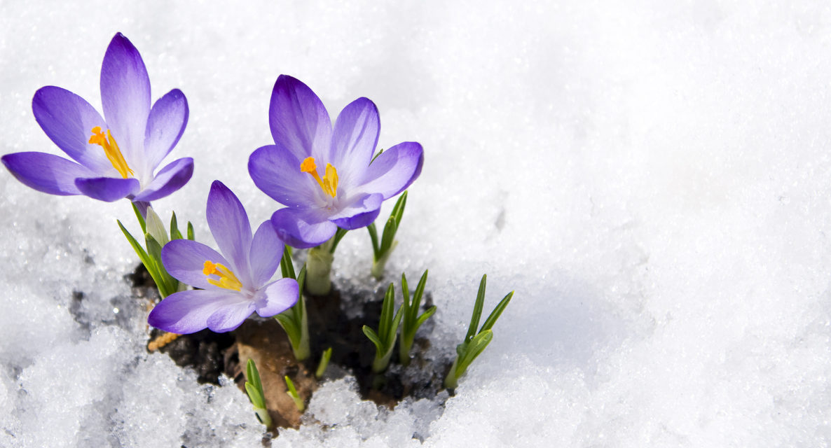5 Ways Gardens Come Alive in the Winter