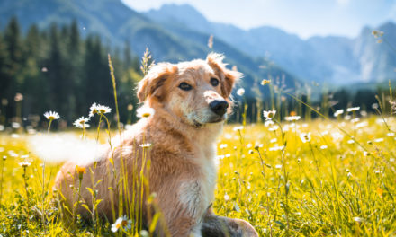 7 Things to Bring When Hiking With Your Dog
