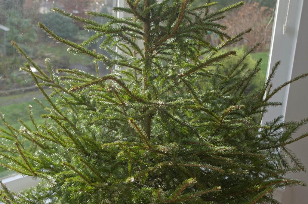 Christmas Tree, Photo Credit: DaveBleasdale (Flickr).