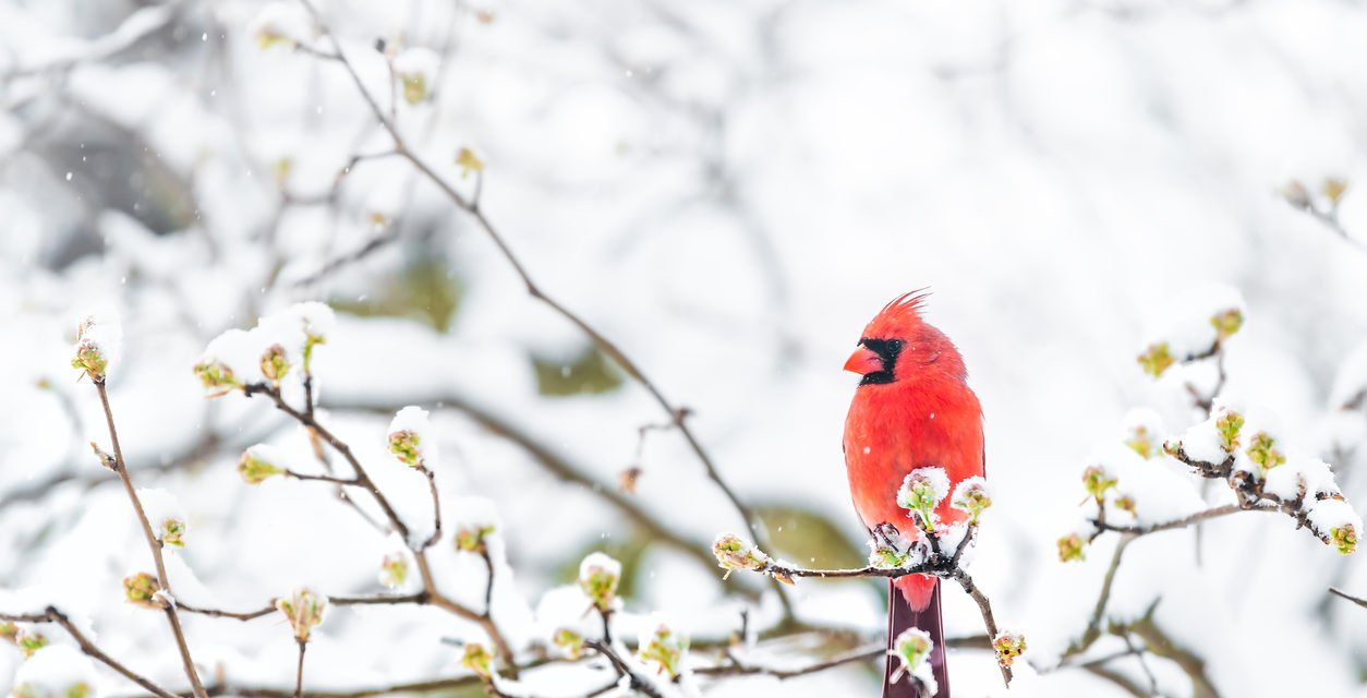 Don't Let Winter Stop You From Bird Watching