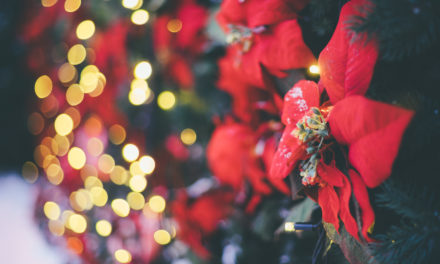 Your Holiday Poinsettias Could Make You and Your Dog Sick