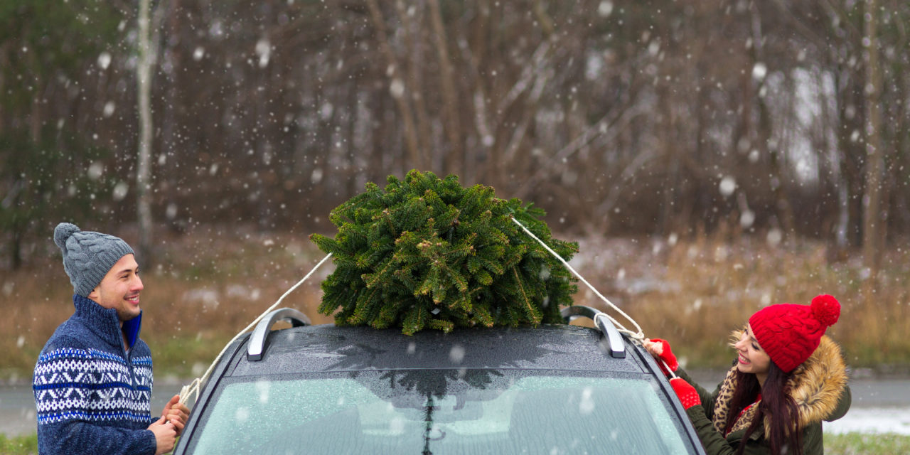 6 Tips for Finding The Perfect Christmas Tree in Colorado