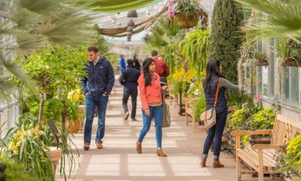 Orchid Showcase at Denver Botanic Gardens Offers Mid-Winter Taste of the Tropics