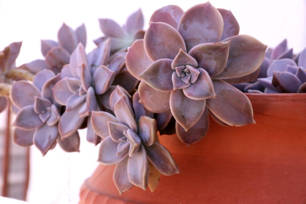 Succulents, Photo Credit: Socha (iStock).
