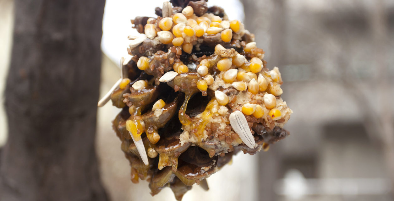DIY Bird Feeder With Pinecones and Peanut Butter