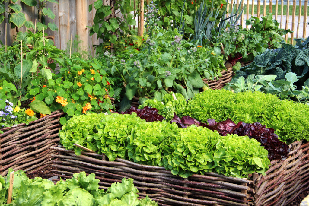 Vegetable Garden, Photo Credit: fotolinchen (iStock).