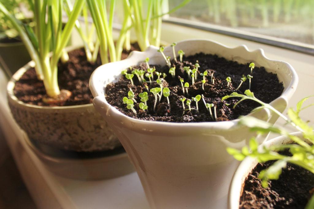 Gardening, Photo Credit: Vaivirga (iStock).