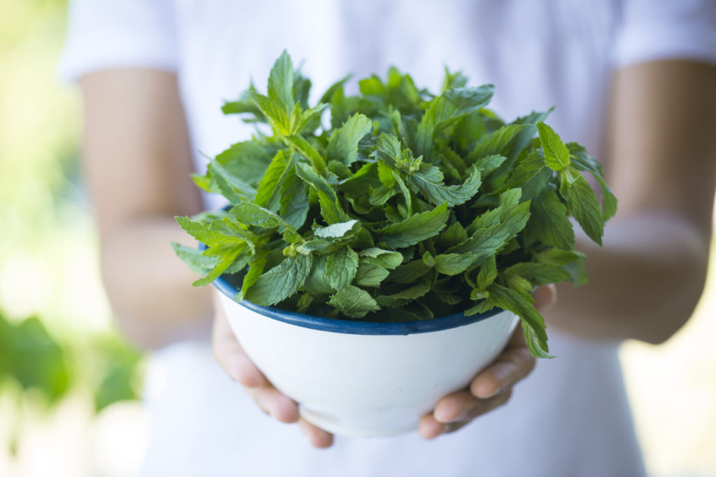 Mint, Photo Credit: solidcolours (iStock).